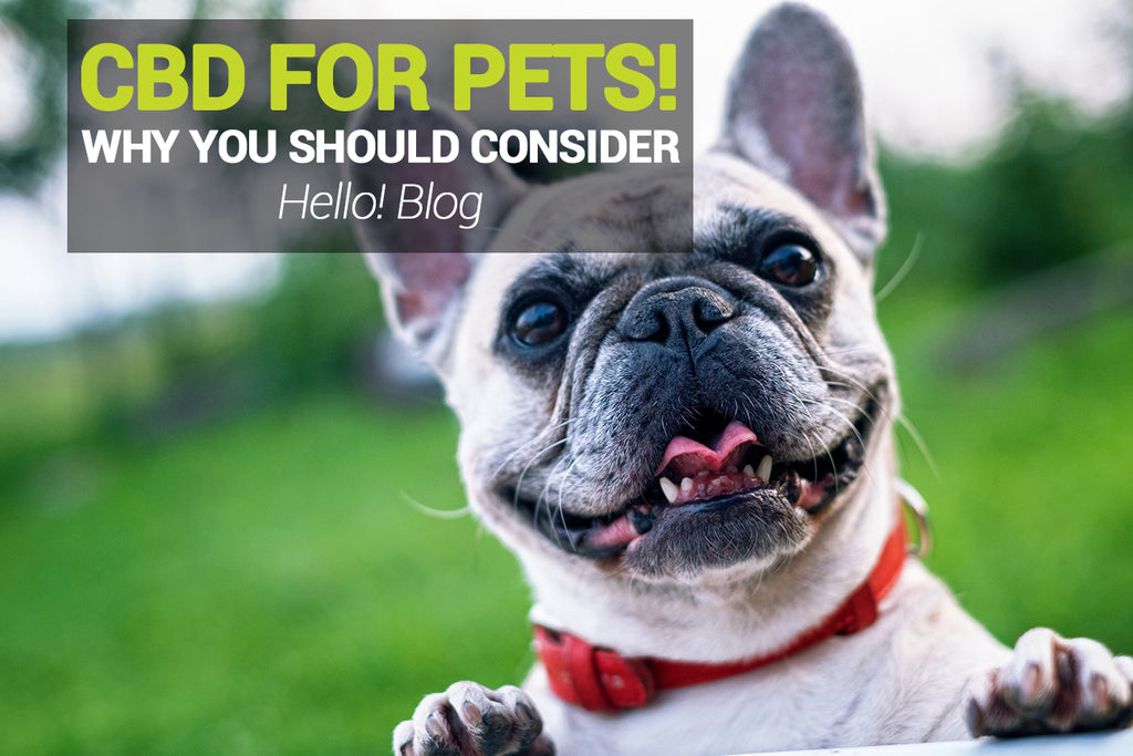 Why You Should Consider Giving Your Pet CBD Oil