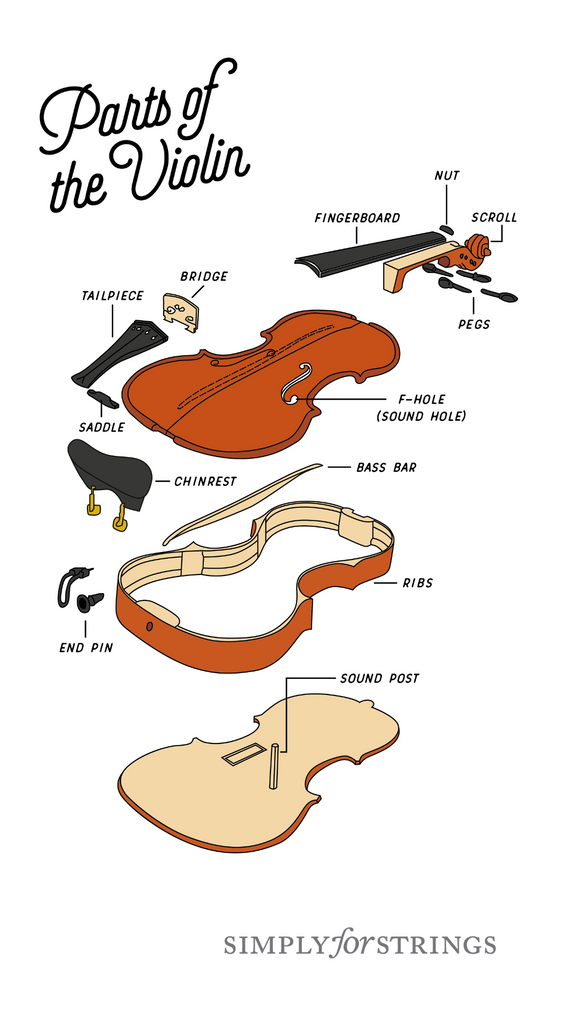 Parts of the violin | Simply for Strings
