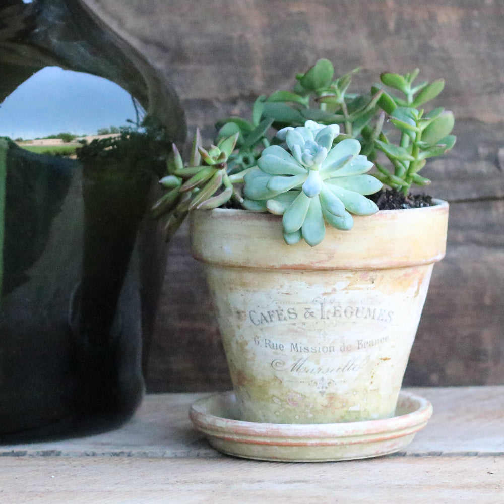 Transform Your Terracotta Pots