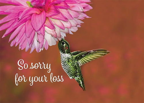 Sorry for your Loss Hummingbird Sympathy Card