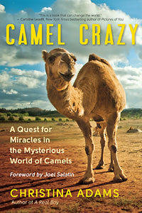 CAMEL CRAZY by Christina Adams, represented by literary agent Dana Newman