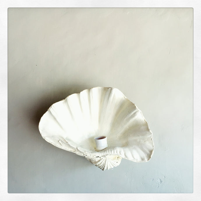 Pearl White Fluted Shell Wall Sconce