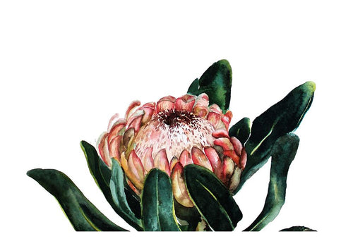 Blooming Protea Canvas - 60x40cm
