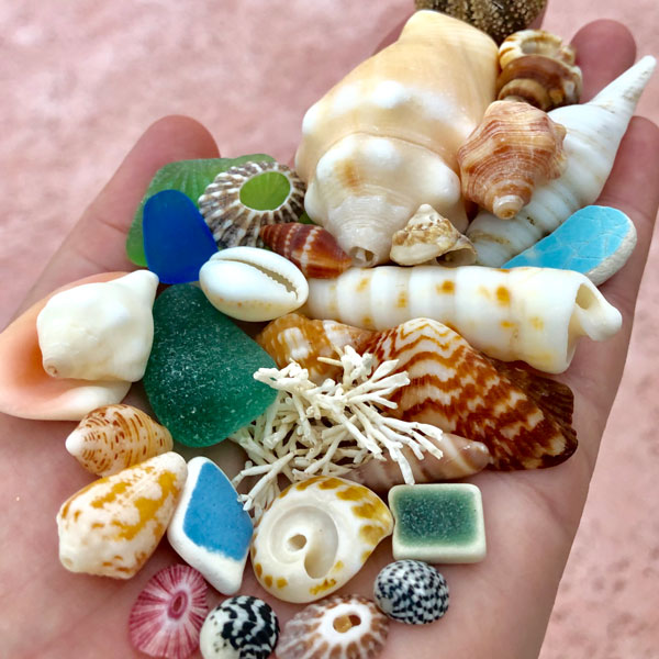 Beachcombing July/August 2019 Issue - FREE U.S. Shipping