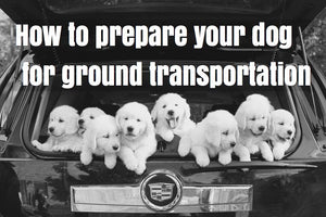 How to prepare your dog for ground transportation.