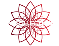 AM Collections