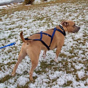 X-Back Pulling Harness Small (Kicksledding Skijoring)