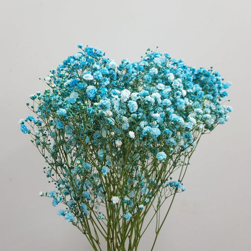 Colour Baby Breath (Imported) - Blue