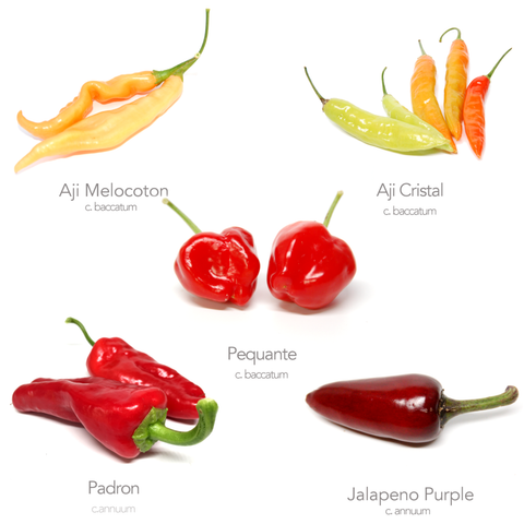 5 x Mild Chilli Varieties (Money Saving Bundle No.1)