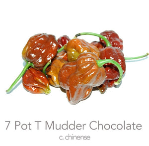 7 Pot T Mudder Chocolate Chilli Seeds (c.chinense)