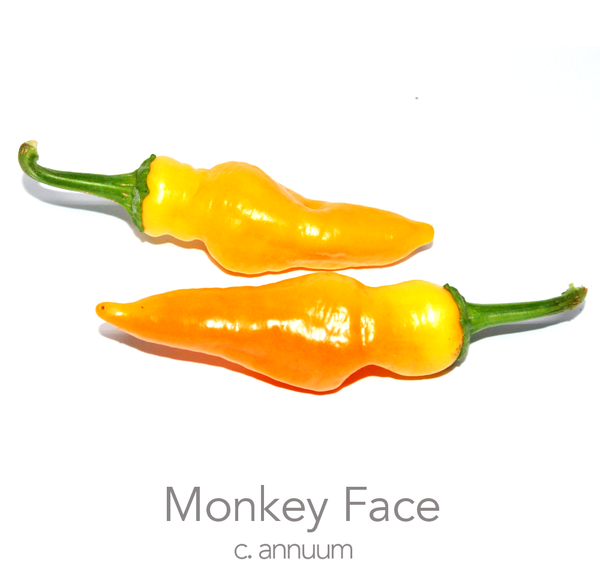 Monkey Face Chilli Seeds (c.annuum)