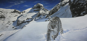 Lynx in the Rockies (SOLD)