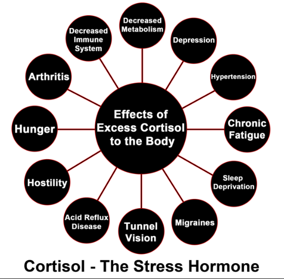 What Does High Cortisol Mean