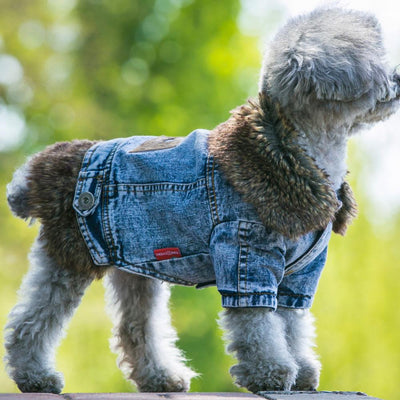 Dogs - 2016 High Quality Cowboy Cotton Dog Clothes Winter Small Dog Coat And Jacket Pet Clothing XXL Dogs Costume Thicken Overcoat -   jetcube