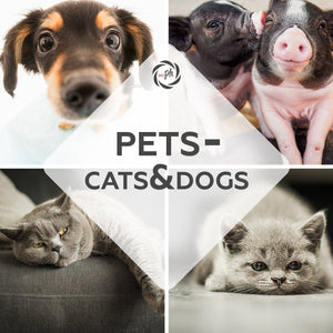Pets – Cats & Dogs