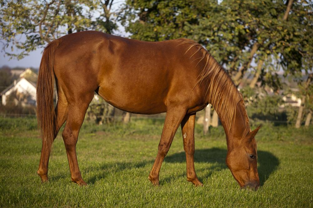Pregnant mare herbs. Is Your Mare Pregnant? Some helpful herbs to feed.