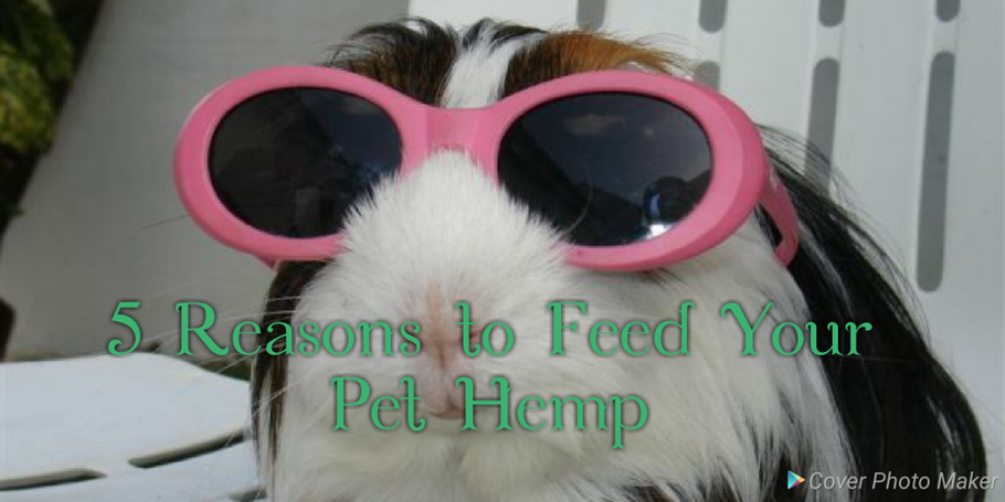 5 REASONS TO FEED YOUR PET HEMP