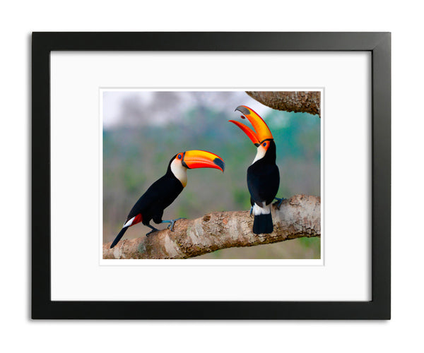 Pop that Seed, Taco Toucan, Brazil, by Robert Ross