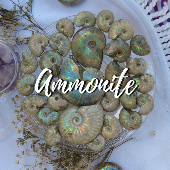 Ammonite Collection from Simply Affinity, Opalized Ammonites