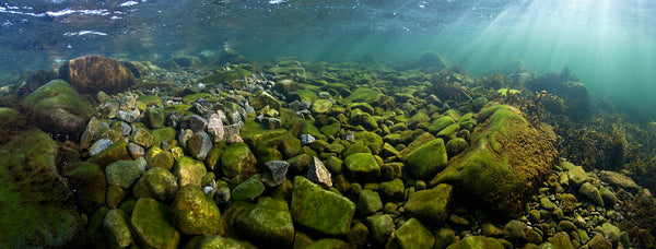 Hanko Baltic Sea Underwater Photography
