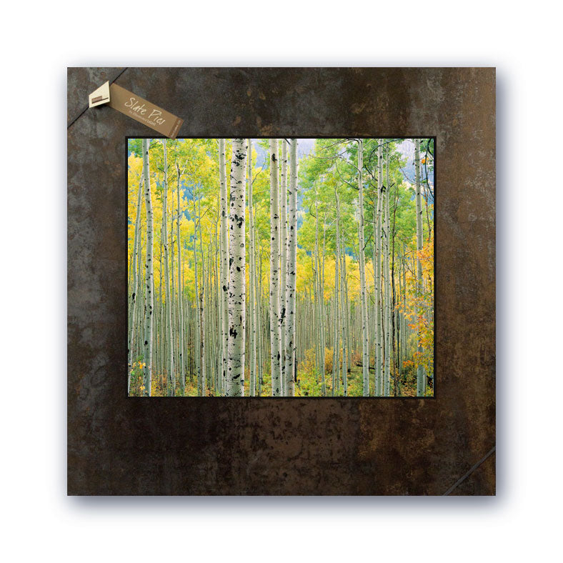 """Aspen Grove, Independence Pass, Colorado"" by David Clack"