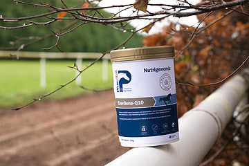 MicroActive CoQ10: The Special Ingredient In Plusvital's EnerGene Q10 available from Amacron Equine.