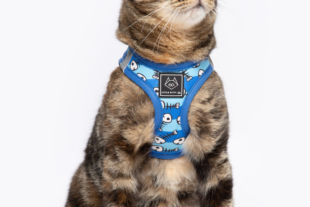 Step In Cat Harness For Cats  U0026 Kittens