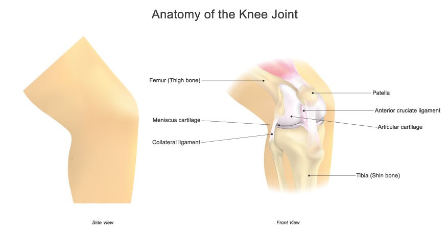 Knee anatomy image