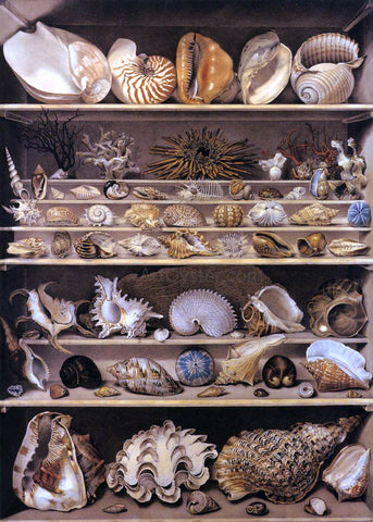 Alexandre-Isidore Leroy De Barde Selection of Shells Arranged on Shelves - Hand Painted Oil Painting