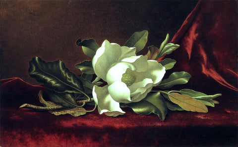 Martin Johnson Heade The Magnolia Blossom - Hand Painted Oil Painting