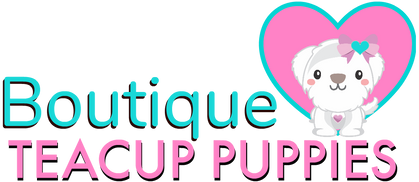 Boutique Teacup Puppies