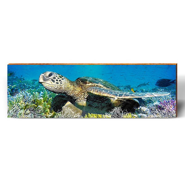 Sea Turtle Reef Life