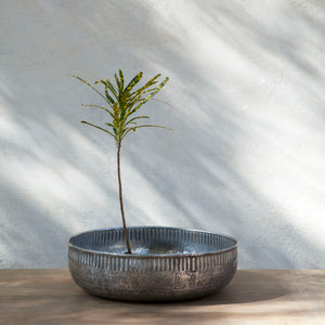 Reha Deep Tray Planter