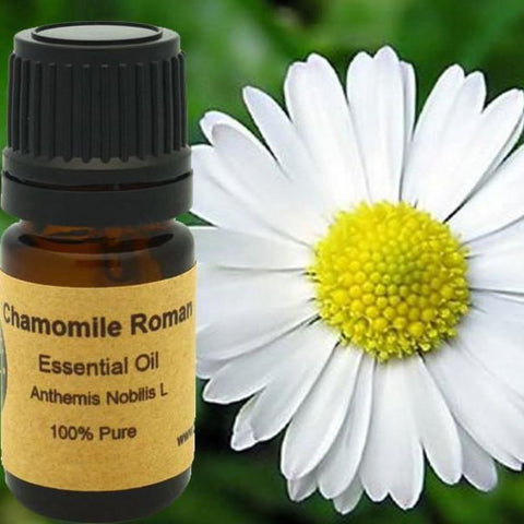 Chamomile Roman Essential Oil - Conventional (Non GMO) Steam Distilled