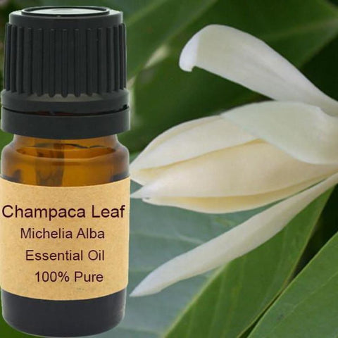 Champaca Leaf Essential Oil - Wild Harvested Steam Distilled
