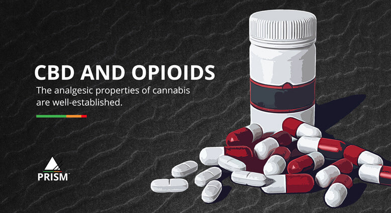 CBD and opioids