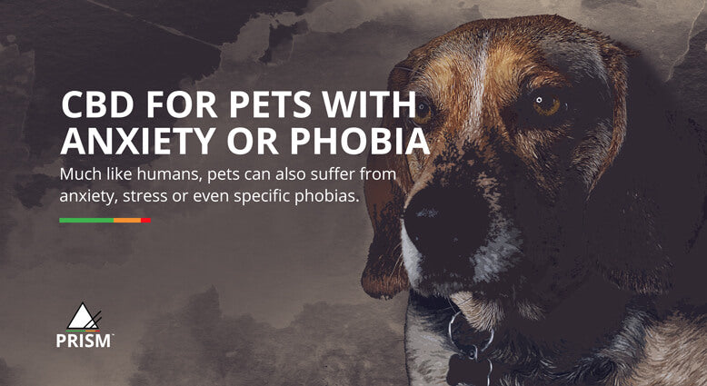 CBD for pets with anxiety or phobia