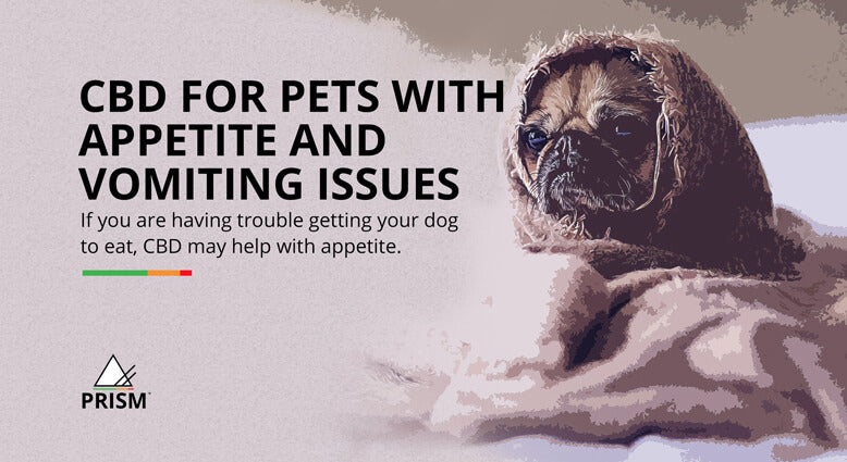 CBD for pets with appetite and vomiting issues