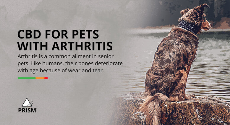 CBD for pets with arthritis