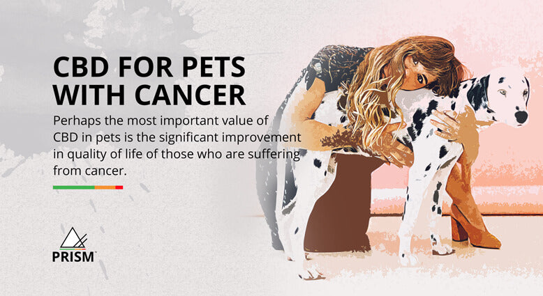 CBD for pets with cancer