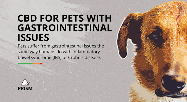 CBD for pets with gastrointestinal issues