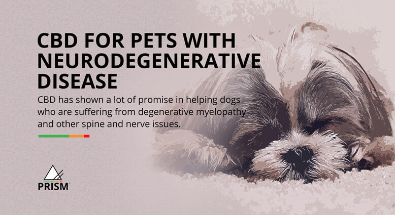 CBD for pets with neurodegenerative disease
