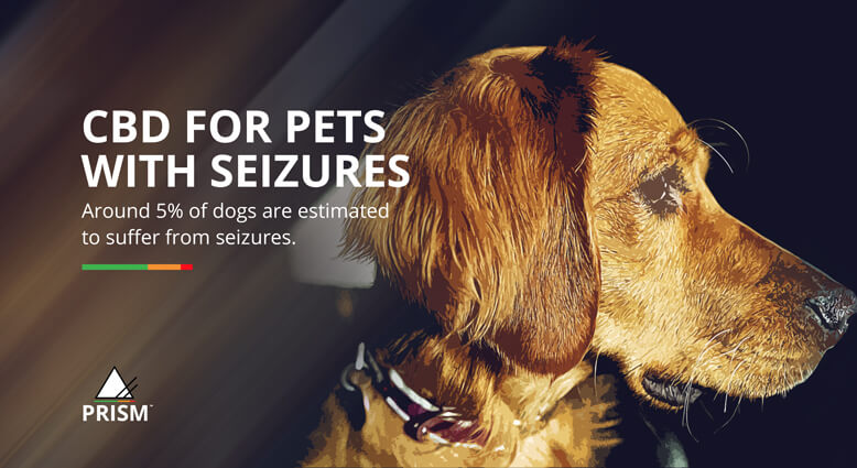 CBD for pets with seizures