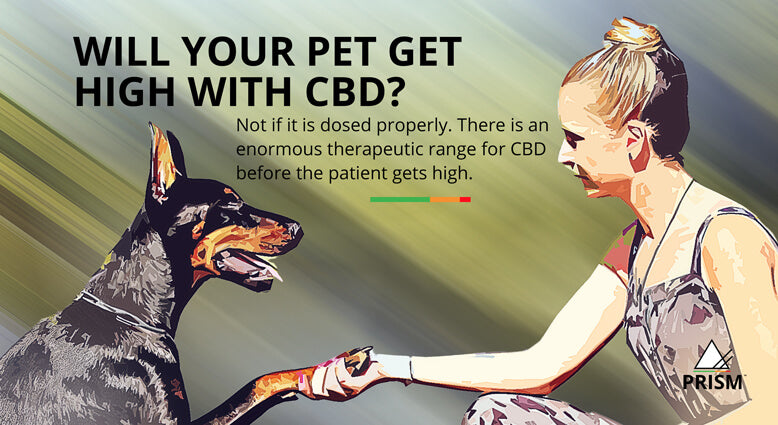 Will your pet get high with CBD?