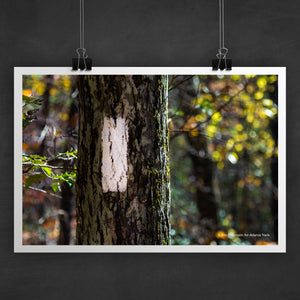 Appalachian Trail Blaze Photo Art Print