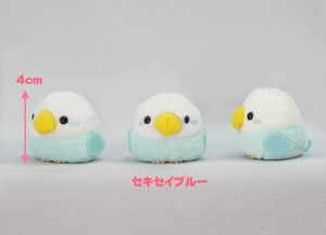 "Petite All-Star ""Budgerigar Bule"" - KMI"