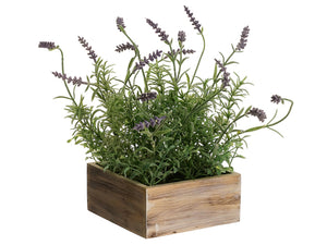 "12.5"" Lavender in Wood Pot  Lavender (pack of 6)"