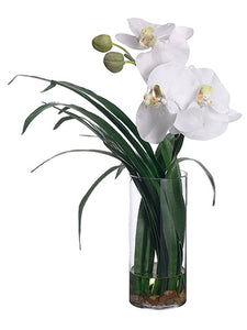 "16"" Phalaenopsis Orchid in Glass Vase White (pack of 1)"