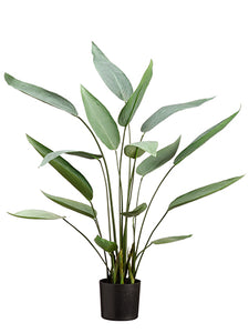 "36"" Water Canna Plant With 16 Leaves in Pot Green (pack of 2)"