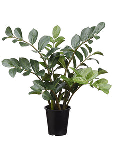 "27"" Zamioculcas in Pot  Green (pack of 3)"